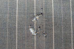 Das wirken von Motten auf Textilien